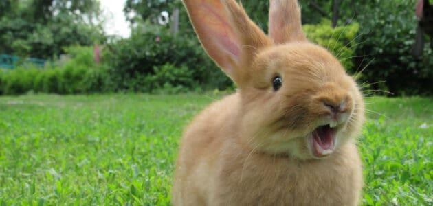 140 Cute Rabbit Names to Make Your Bunny Binky