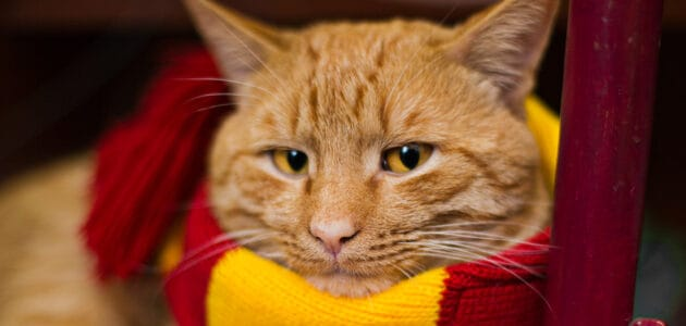 The Best Harry Potter Cat Names