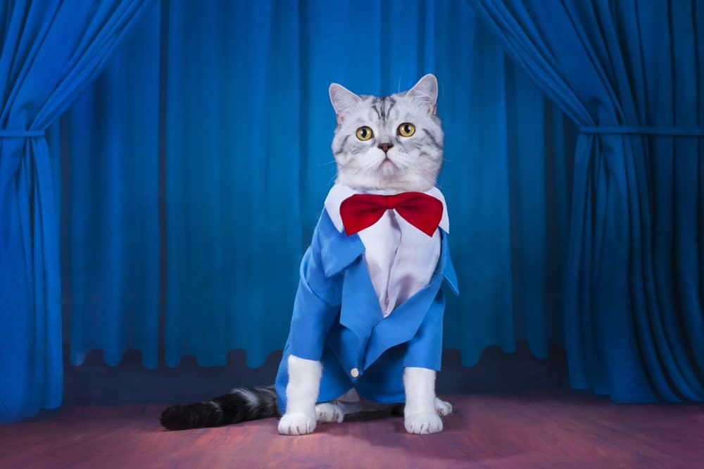 cat in suit jacket and tie