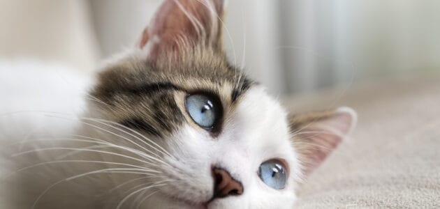 Mythical Cat Names for Your Magical Furbaby