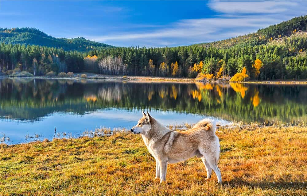 dog by a lake and trees