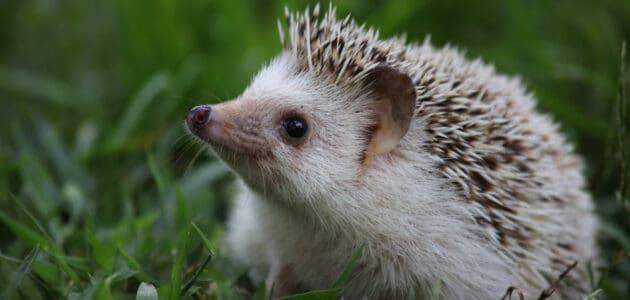 215 Cute Hedgehog Names for Your Prickly Potato