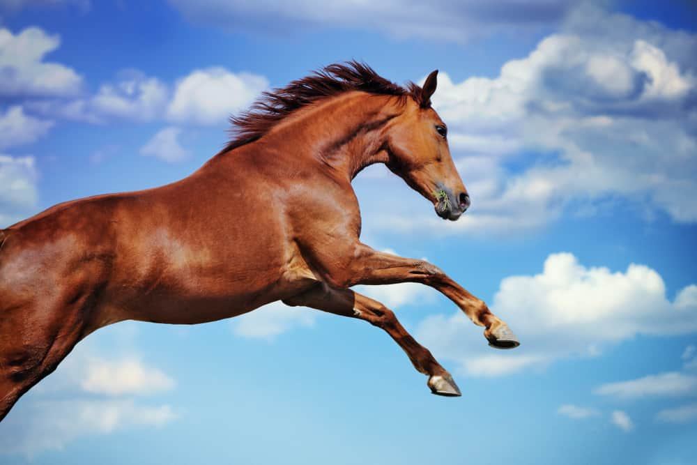 jumping horse against blue sky