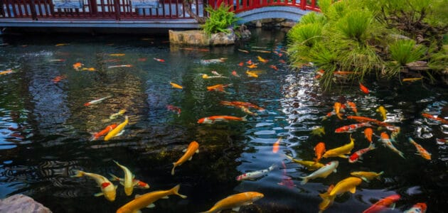The 10 Best Koi Pond Filters in 2021