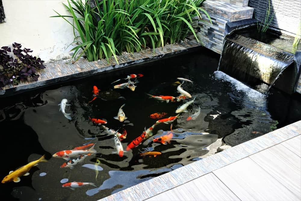 minimalist koi pond with waterfall design