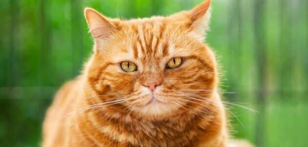 150+ Orange Cat Names