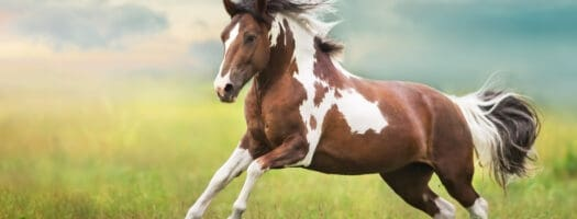 146 Native American Horse Names Full of Meaning