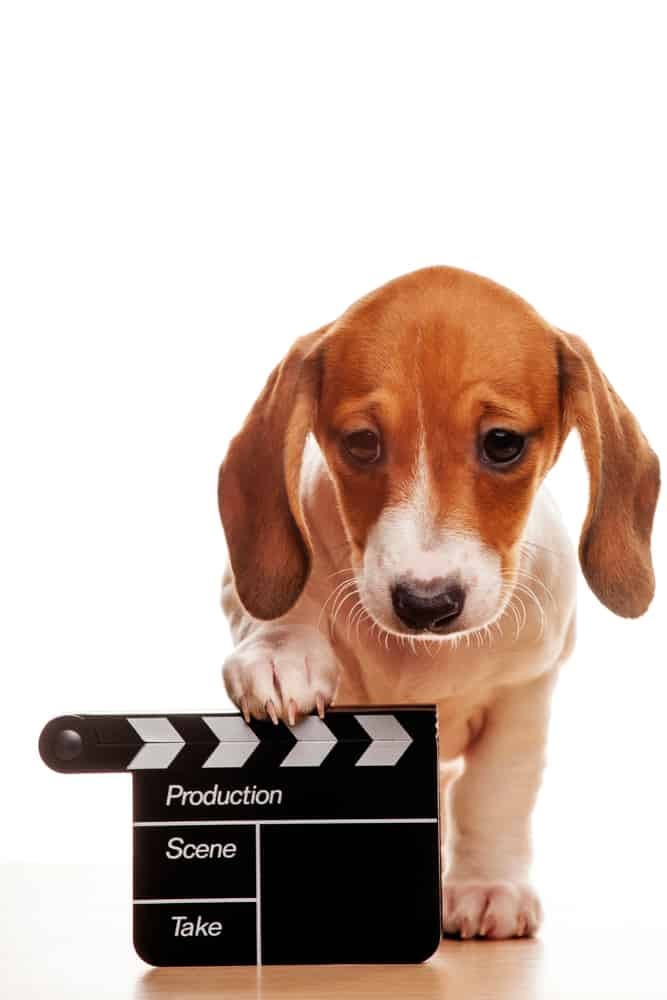 puppy with a clapperboard
