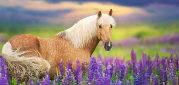 280+ Girl Horse Names for Frisky Fillies and Mature Mares