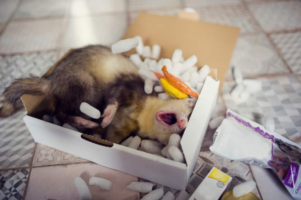 a ferret plays in a box of packing peanuts