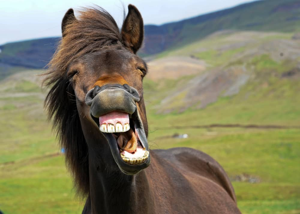 a horse with its mouth wide open showing its teeth