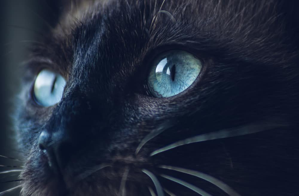 black cat with bright blue eyes