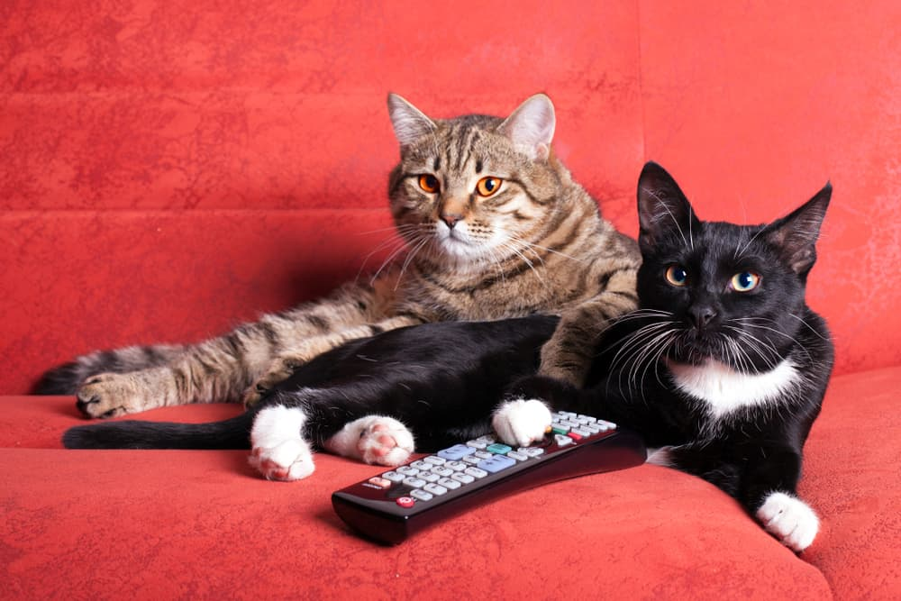 black cat with paw on remote