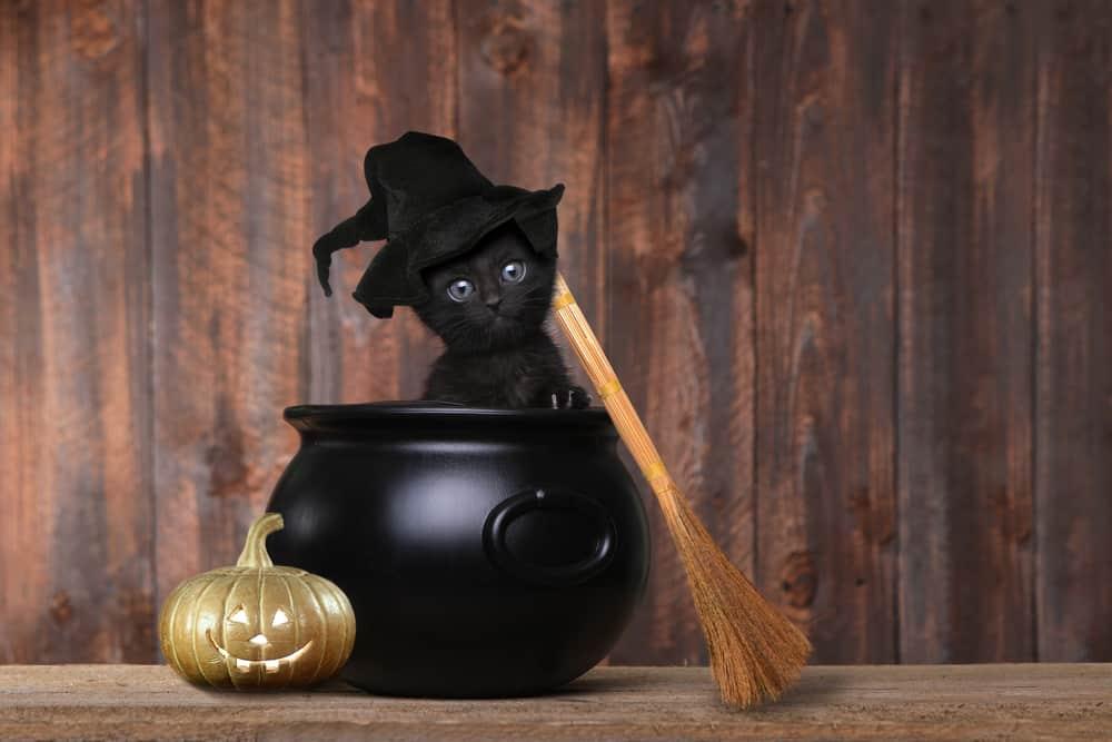black kitten in cauldron wearing witch hat