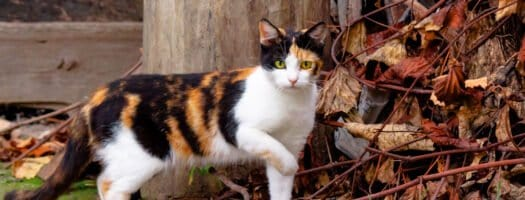 140+ Calico Cat Names for Your Lucky Feline