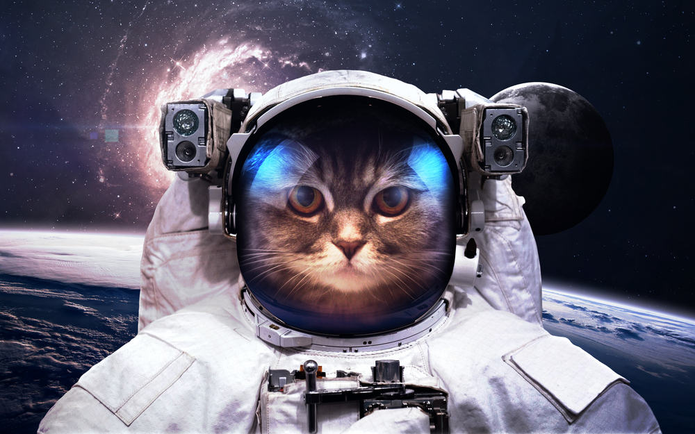 cat dressed up as astronaut in outer space