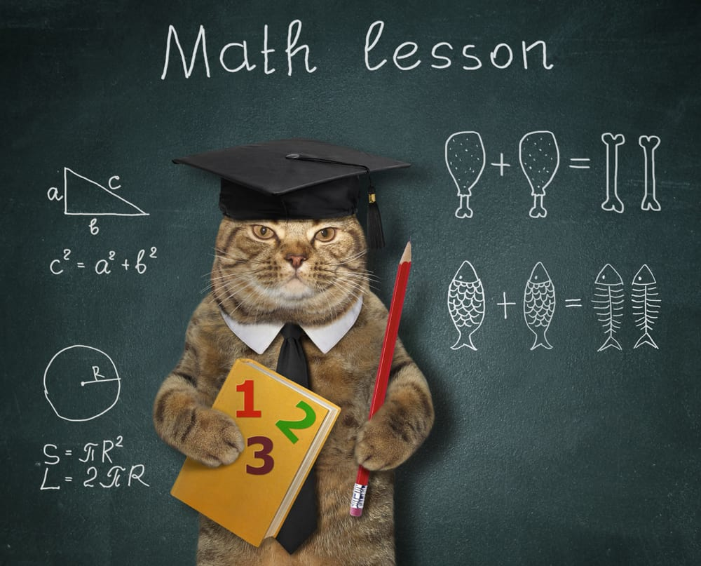 cat in teacher costume in front of blackboard
