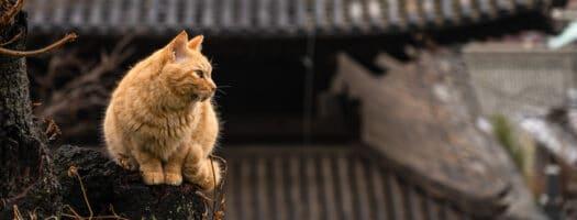 180+ Kawaii Japanese Cat Names for Your Gorgeous Feline