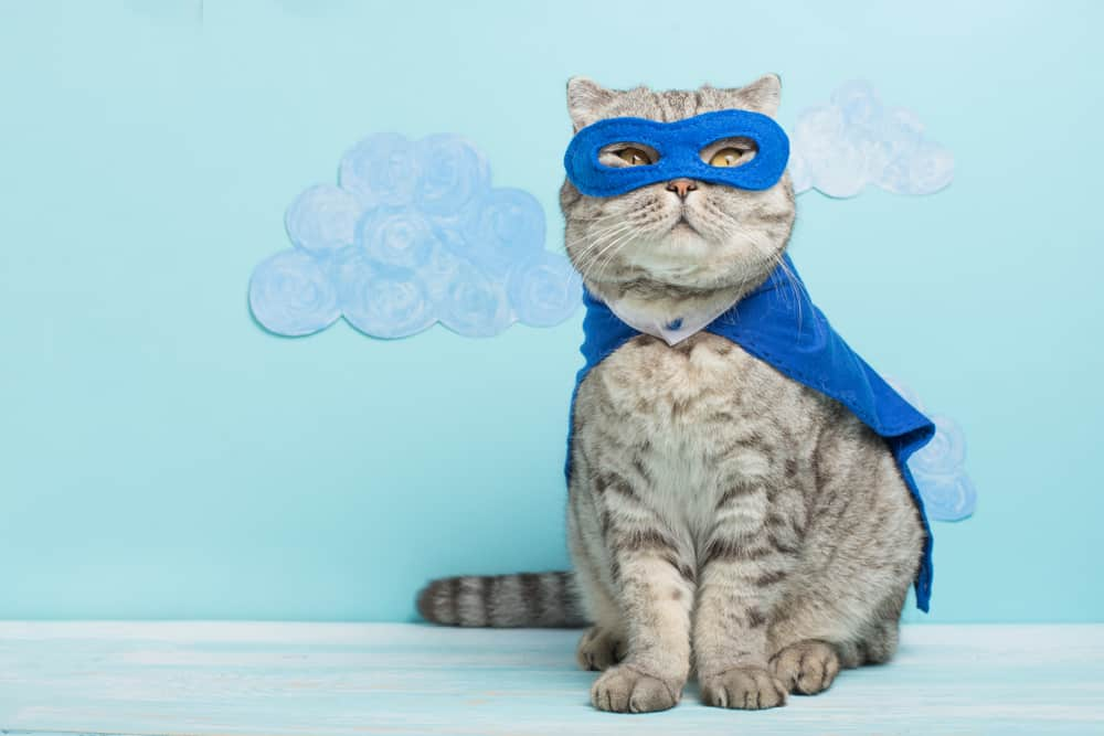 cat wearing blue eye mask and cape
