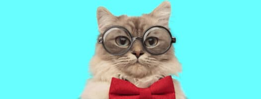 160+ Nerdy Cat Names to Show off Your Geek Pride
