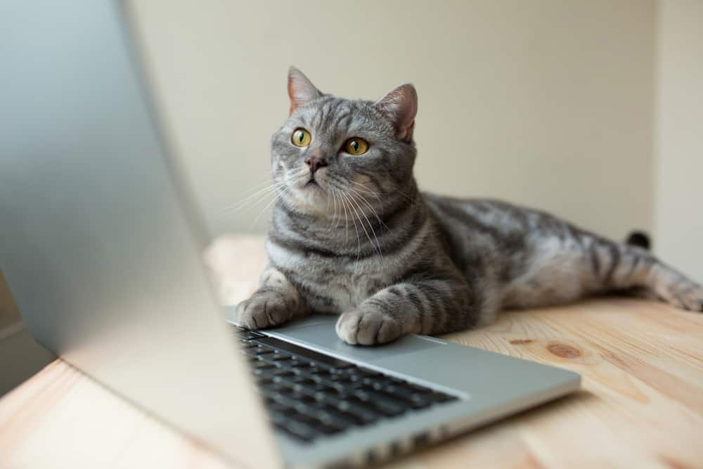 cat with paws on keyboard