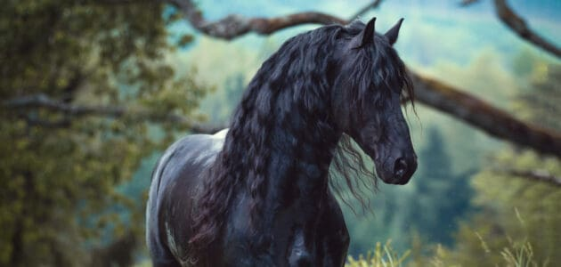 300 Boy Horse Names for Gallant Geldings and Strapping Stallions