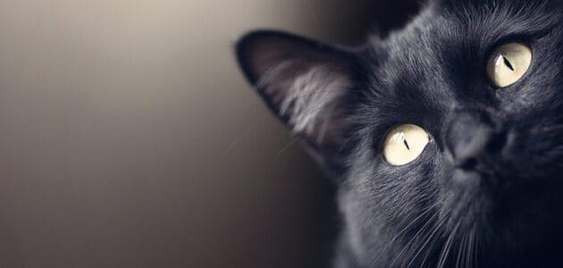 150+ Black Cat Names for Your Enchanting Feline