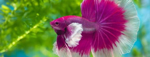 295 Cute Fish Names for Your Fintastic Friends