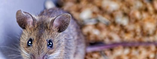 220 Cute Mouse Names for Your Tiny Companion