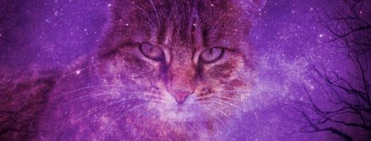 93 Divine Goddess Cat Names