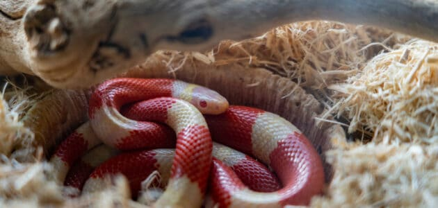 273 Cute Snake Names for Your Pet Noodle