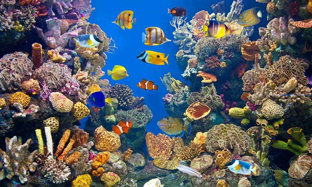 saltwater aquarium with colorful fish