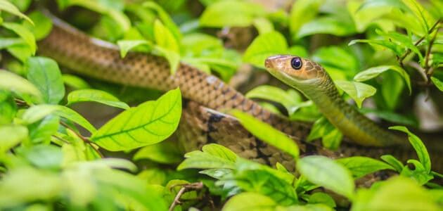 140+ Funny Snake Names That Are Utterly Hissterical