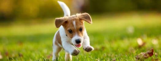 164 Wonderful Dog Names That Start With W