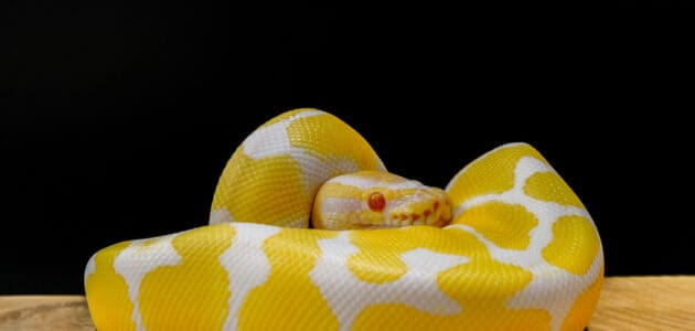 170+ Ssseriously Cool Snake Names for Your Scaly Companion