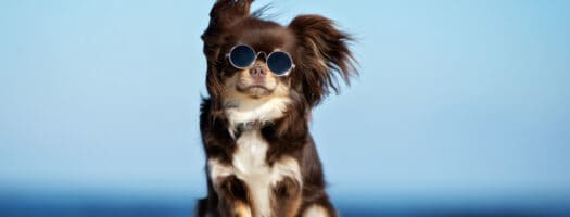 100 Terrific Dog Names That Start With T