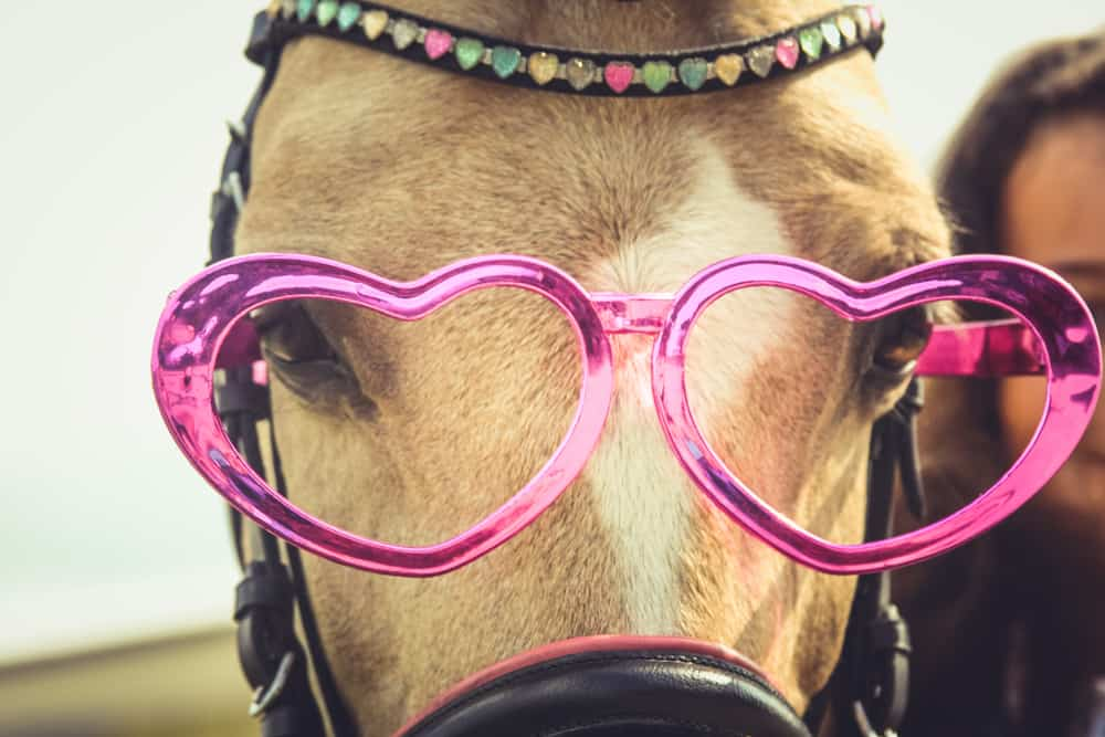 horse wearing pink glasses