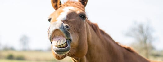 Funny Horse Names That'll Leave You Horse From Laughter