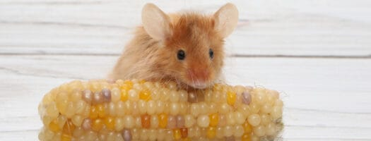 Funny Mouse Names That'll Leave You Squeaking in Laughter