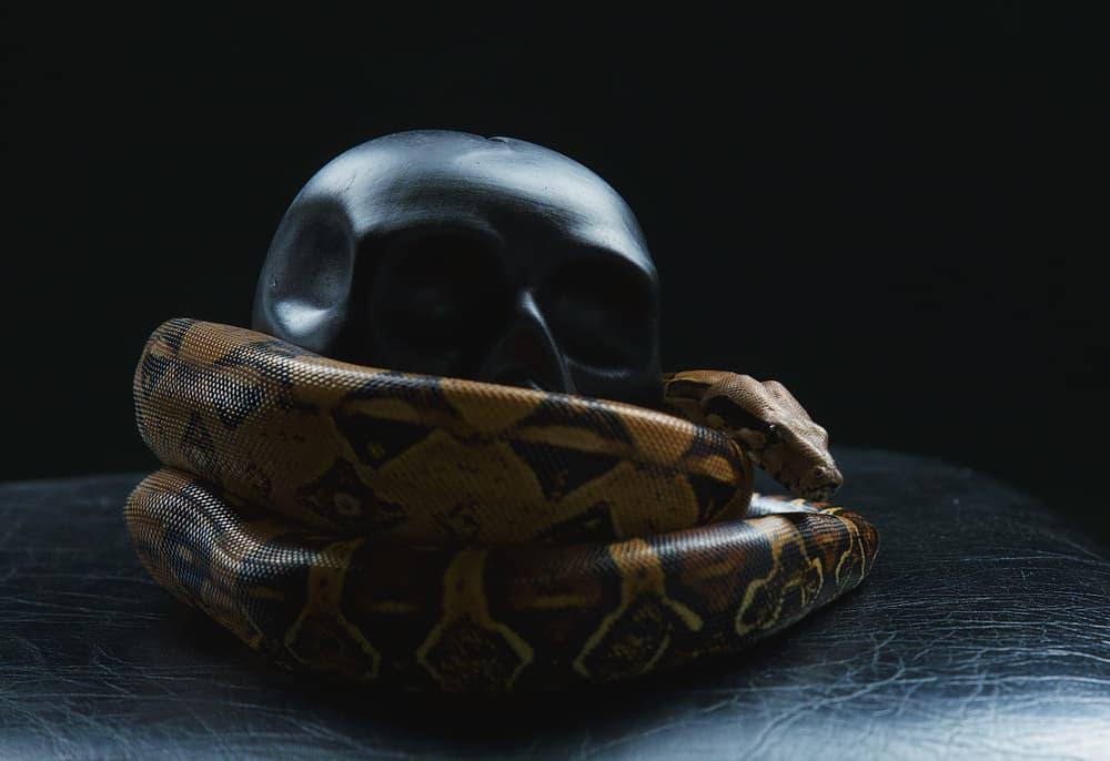 snake coiled around black skull
