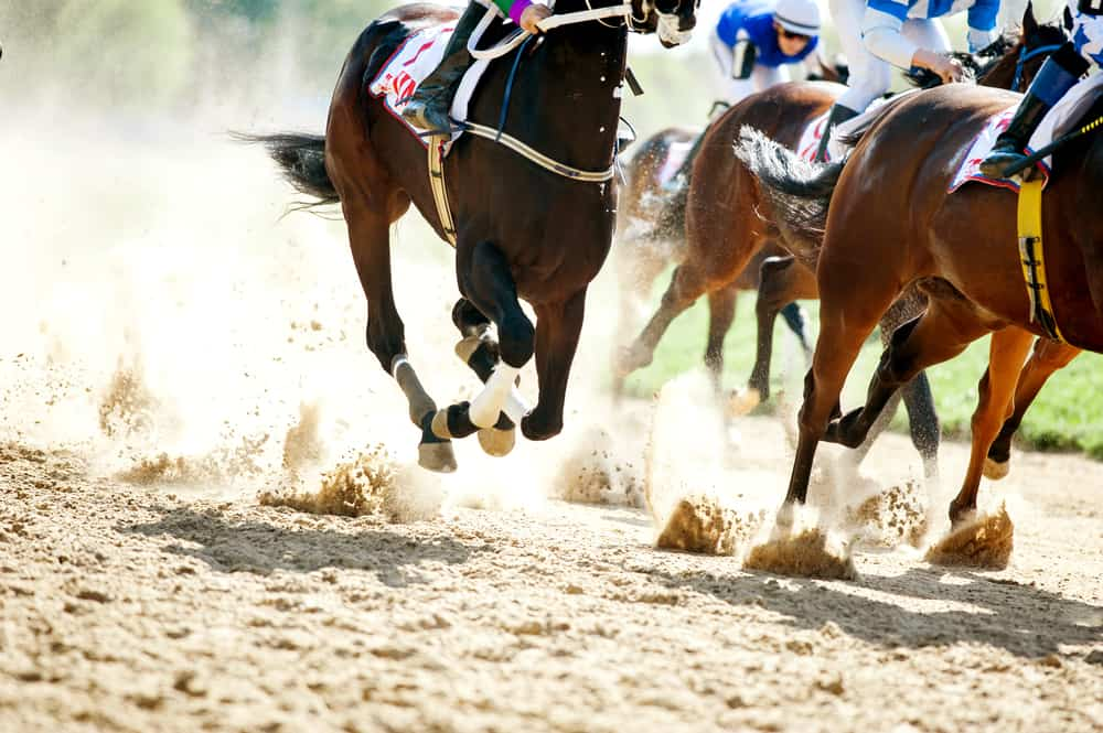 Horses galloping on track