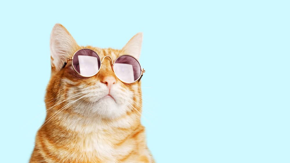 ginger cat wearing sunglasses