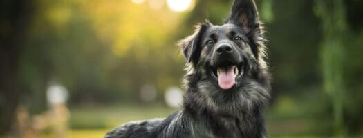 The Best Dog Names That Start With R