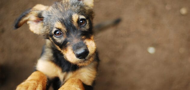 """Beautiful and Bold Dog Names That Start With """"B"""" for Your Best Friend"""