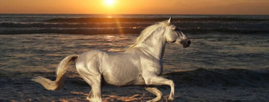 140+ Famous Horse Names for Your Equine Diva