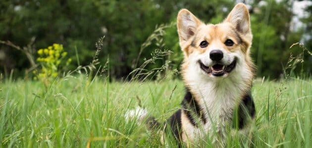 234 Dog Names That Start With L for Your Four-Legged Love