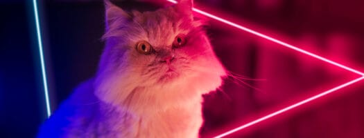 130+ Star Wars Cat Names That Are Out of This World