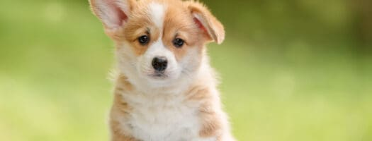 185 Dog Names That Start with P for Your Precious Puppy