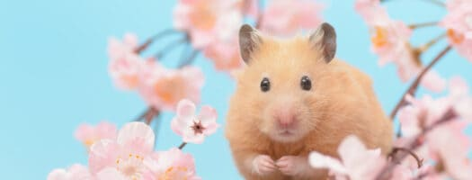 160+ Cute Hamster Names for Your Adorable Wheel-Riding Fluffball