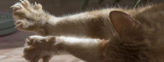 131 Badass Names For Your Cuddly Cat
